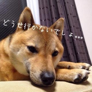 IMG_7760.JPG