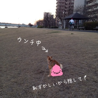 photo-170.JPG